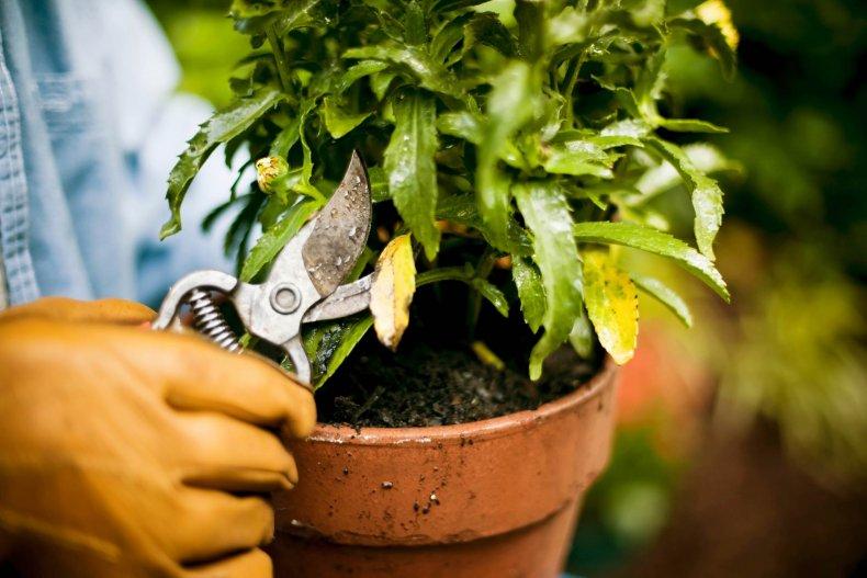 Подрезка комнатных растений