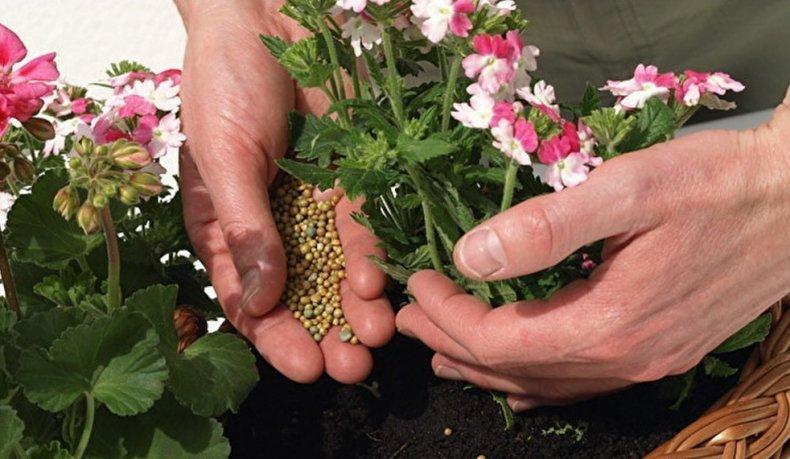 Удобрение декоративных растений
