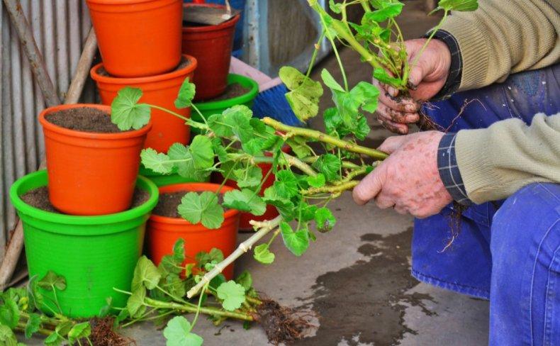 Размножение декоративных растений