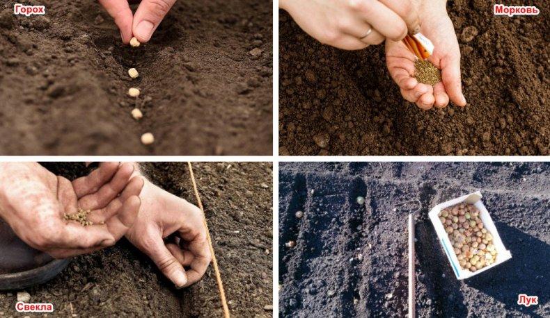 Посев семян весной