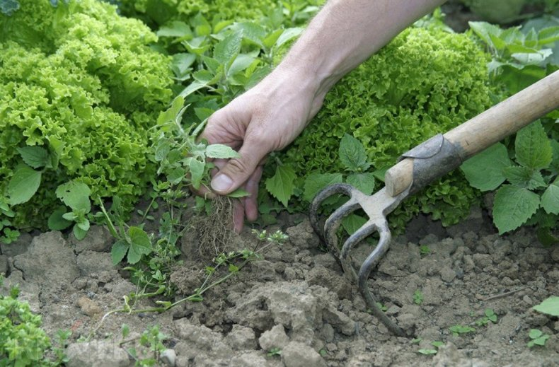 Борьба с сорняками на грядке, рыхление земли