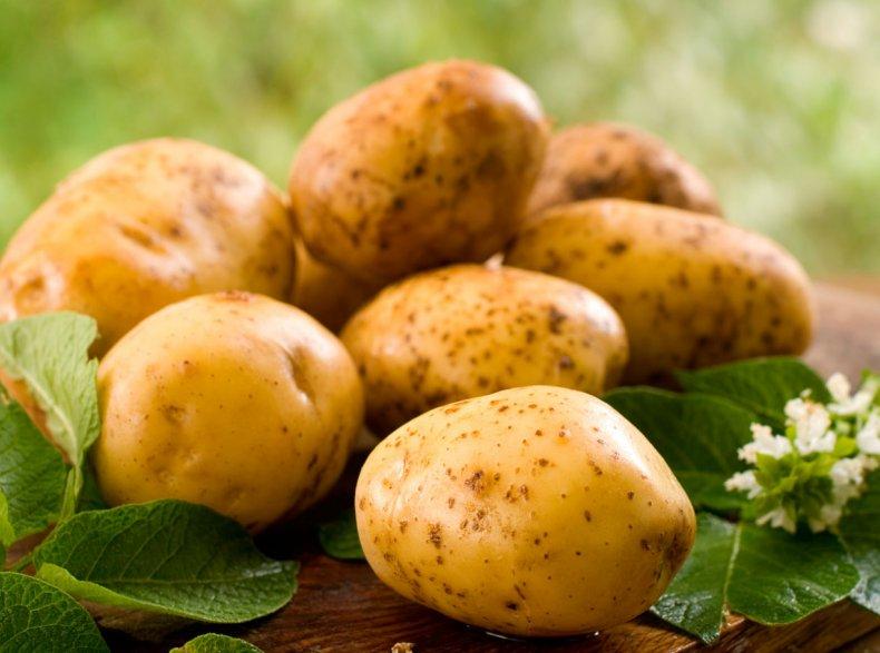 В России дешевеет картофель нового урожая