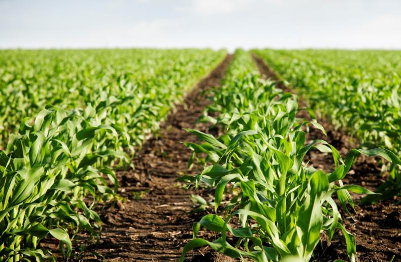ученый, иллинойса, прогнозировать, урожайность