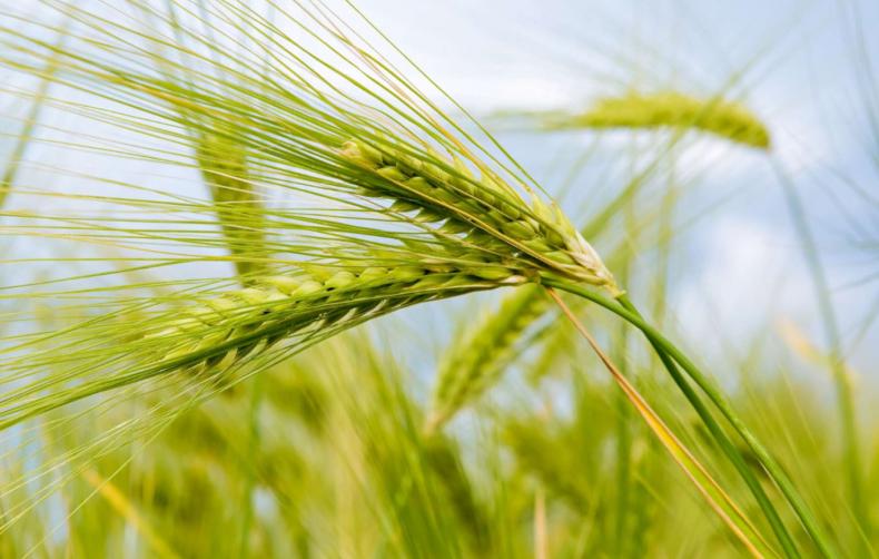 В Николаевской области осталось собрать всего 5% ранних зерновых
