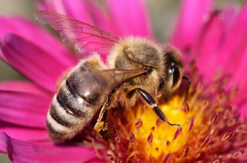 тамбовские, пасечник, защитить, пчела