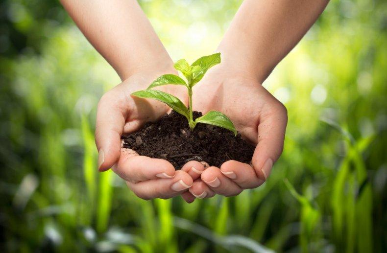 Защита растений в Украине проведена на 97 процентах площадей