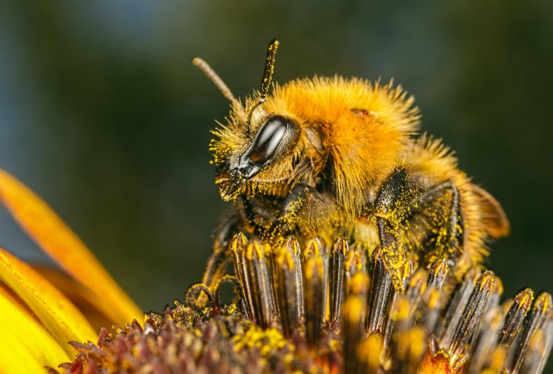 урон, российский, пчеловод, гибель, пчела