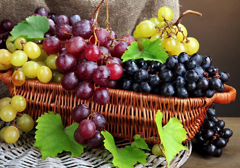 николаевские, виноградарь, ягодник, открывать, сеть, horeca