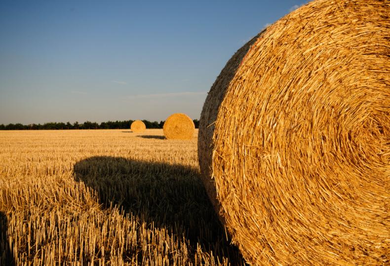 сельский, хозяйство, румынии, развивать, нехватка, кадр