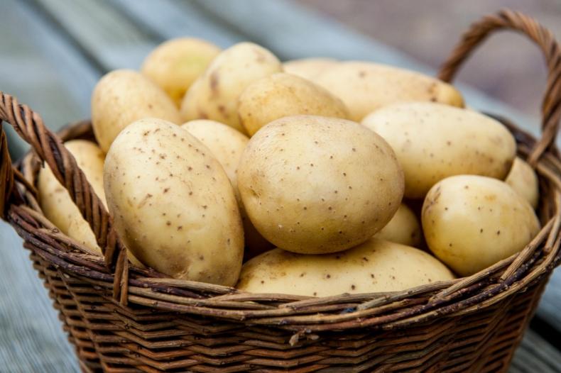 урожай, картофель, польше, миллион