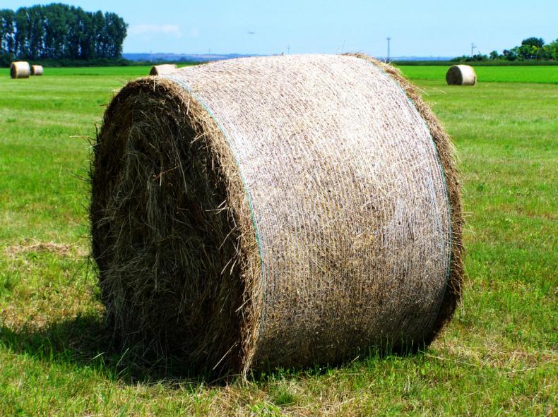 100 тысяч гектаров сенокосов Амурской области не могут скосить из-за погоды