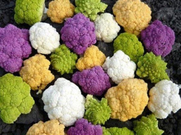 Цветная капуста особенности выращивая из семян