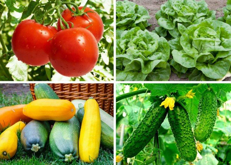Культуры для посева на рассаду в апреле
