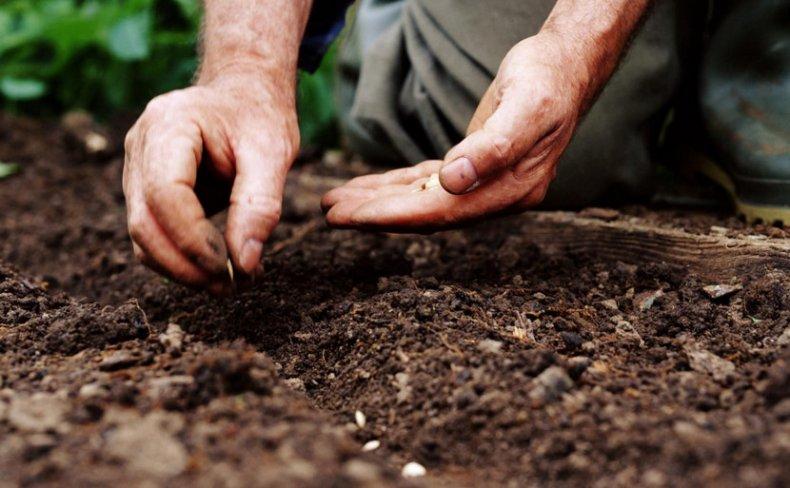 Посев семян на Урале